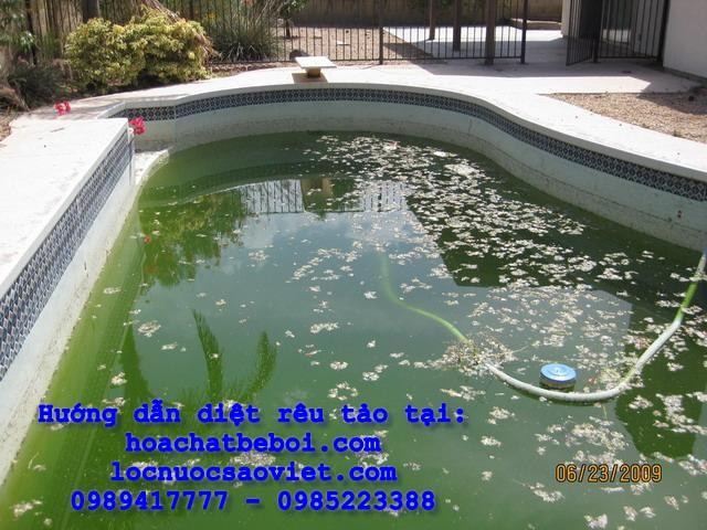 Cách diệt rêu tảo hồ bơi nhanh hiệu quả nhất