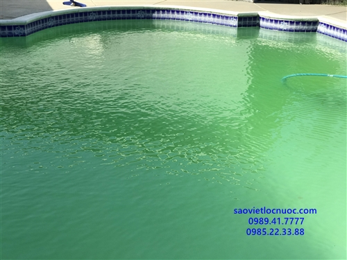 Tại sao bể bơi bị xanh và bị đục sau khi sốc clo